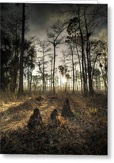 Cypress Stumps And Sunset Fire Greeting Card