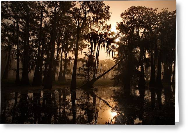 Cypress Sunrise Greeting Card
