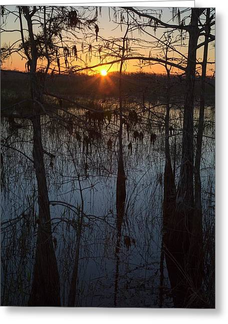 Cypress Swamp At Sunrise Greeting Card