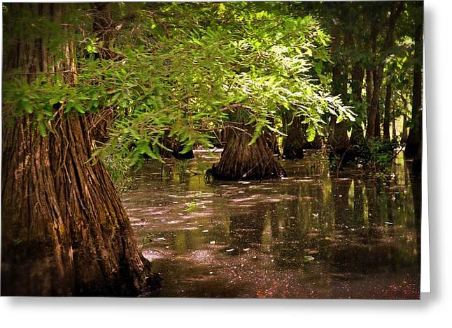 Cypress Swamp Greeting Card by Marty Koch