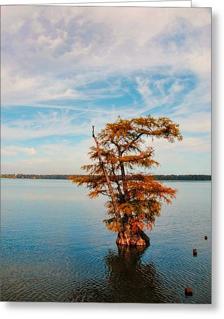 Cypress Tree In Autumn I Greeting Card by Jai Johnson