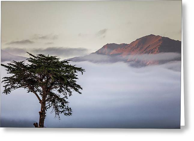 Cypress Tree In Foreground With Clouds Greeting Card by James White