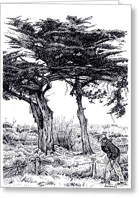 Cypress Trees And A Sneeze Greeting Card by Joseph Juvenal
