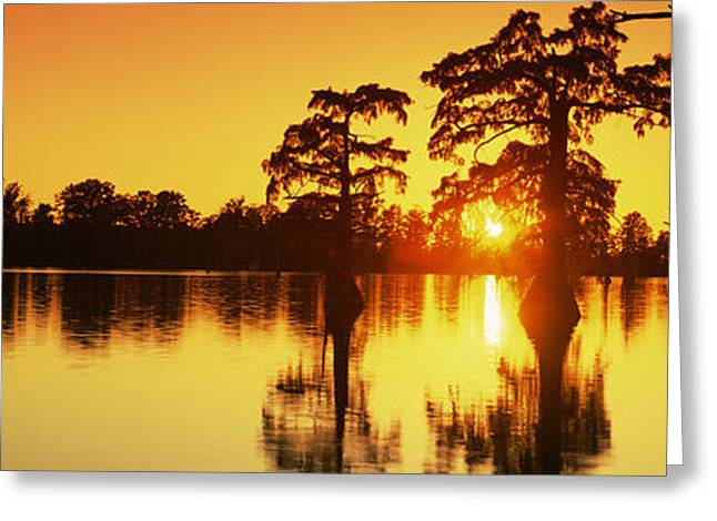 Cypress Trees At Sunset, Horseshoe Lake Greeting Card by Panoramic Images