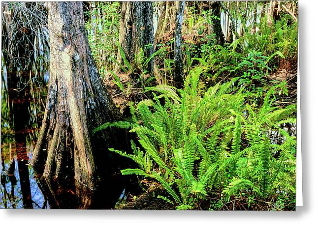 Cypress Trees In Swamp, Six Mile Greeting Card
