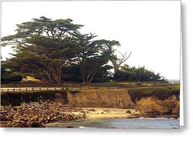 Cypress Trees On 17 Mile Drive Greeting Card by Barbara Snyder