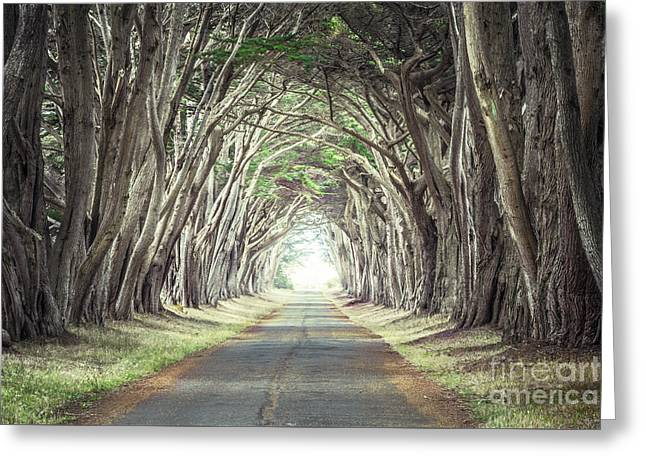 Cypress Tunnel Greeting Card by Alexander Kunz