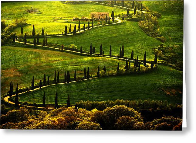 Cypresses Alley Greeting Card by Jaroslaw Blaminsky