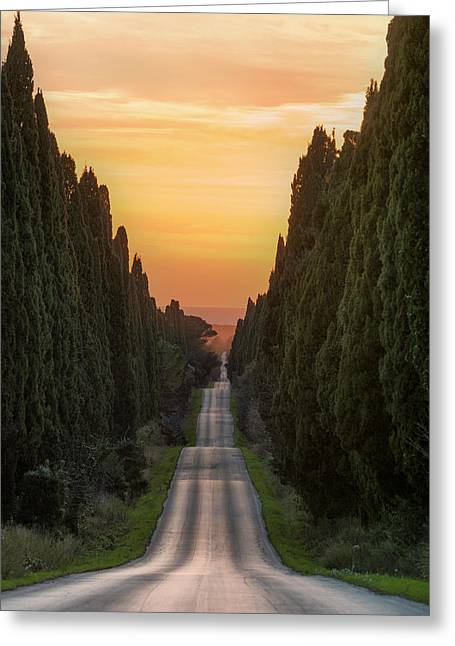 Cypresses Road Greeting Card
