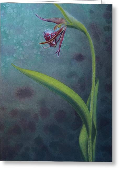Cypripedium Arietinum Iv Greeting Card