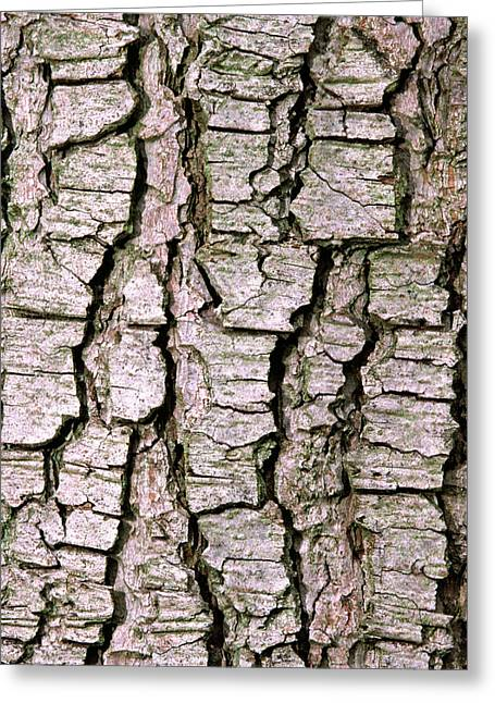 Cyprus Cedar Bark Abstract Greeting Card by Nigel Downer
