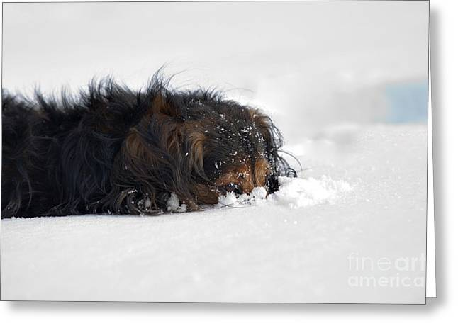 Dachshund In The Snow Greeting Card