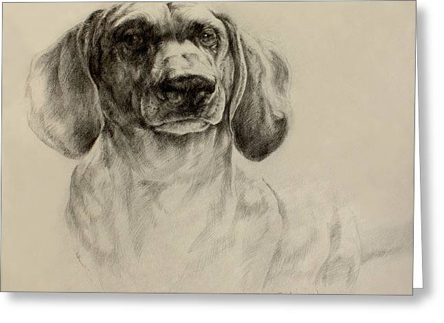 Dachshund Sketch Greeting Card by Derrick Higgins