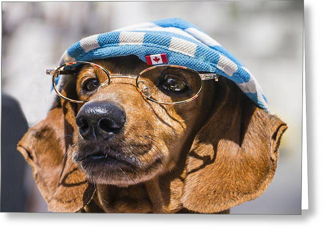 Dacsuhund With Hat And Eyeglasses Greeting Card
