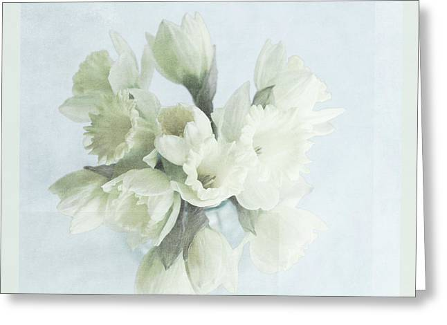 Daffodil Blue Greeting Card by Beverly Cazzell