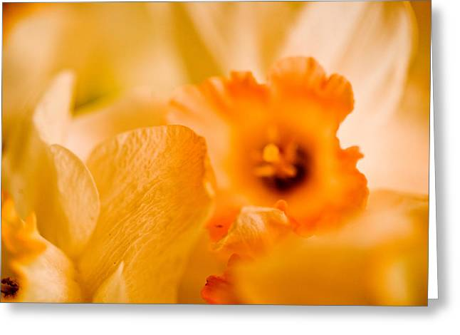 Daffodil Bouquet Greeting Card by John Holloway