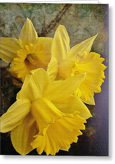 Greeting Card featuring the photograph Daffodil Burst by Diane Alexander