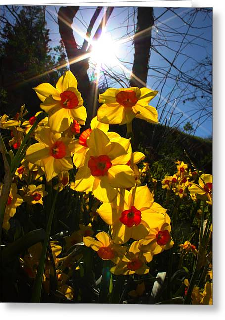 Greeting Card featuring the photograph Daffodil Days by Richard Stephen
