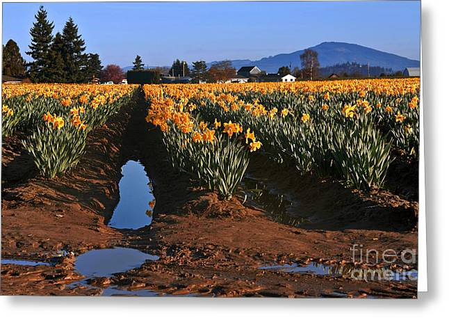 Greeting Card featuring the photograph Daffodil Field After A Spring Rain by Valerie Garner