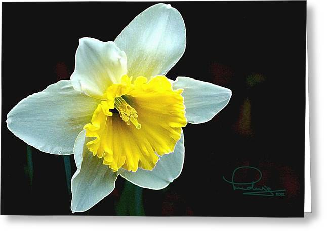 Greeting Card featuring the photograph Daffodil by Ludwig Keck