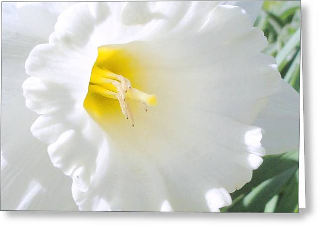 Daffodil Greeting Card by Mary Beth Landis