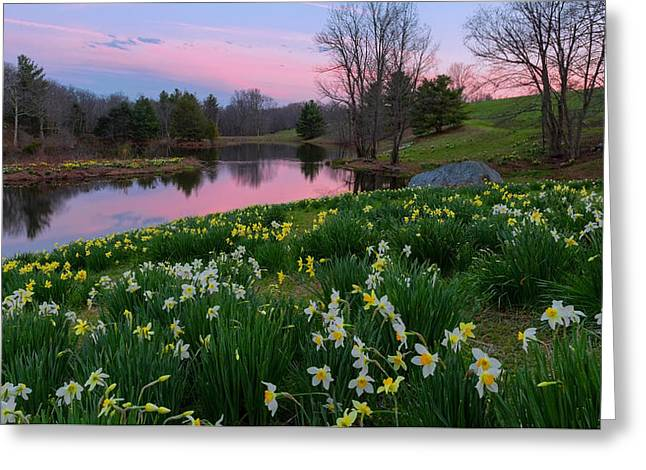 Daffodil Sunset Greeting Card by Bill Wakeley