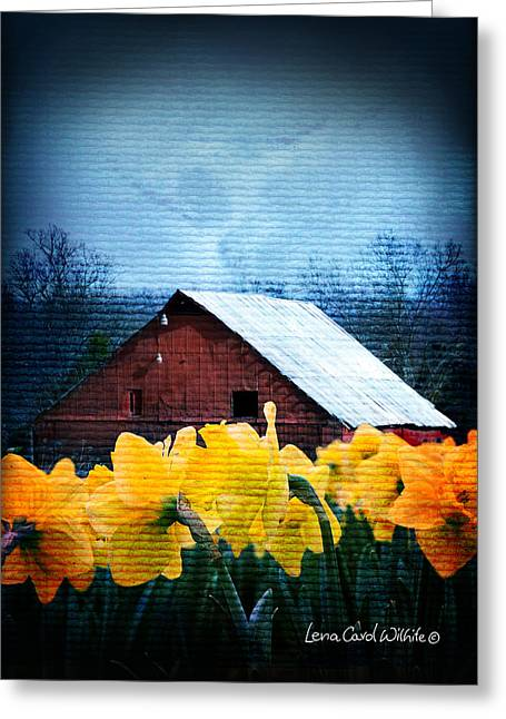 Daffodils And A Red Barn Greeting Card