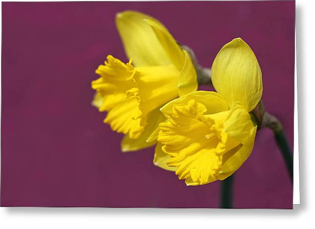 Greeting Card featuring the photograph Daffodils by Barbara West