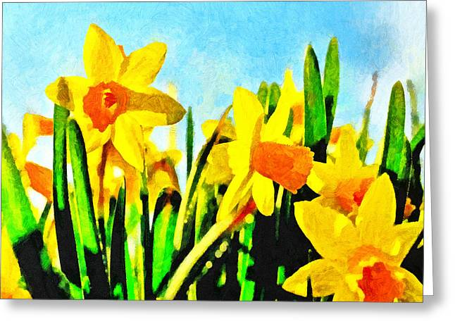Daffodils By Morning Light Greeting Card