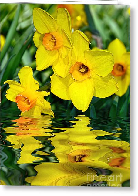 Daffodils By The Lake Greeting Card by Kaye Menner
