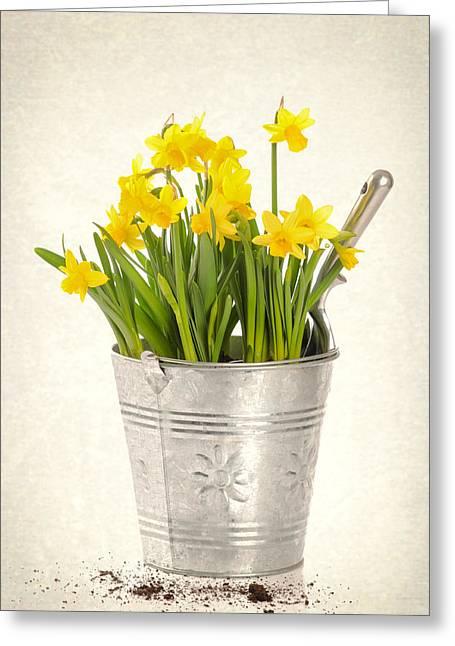 Daffodils Greeting Card by Amanda Elwell