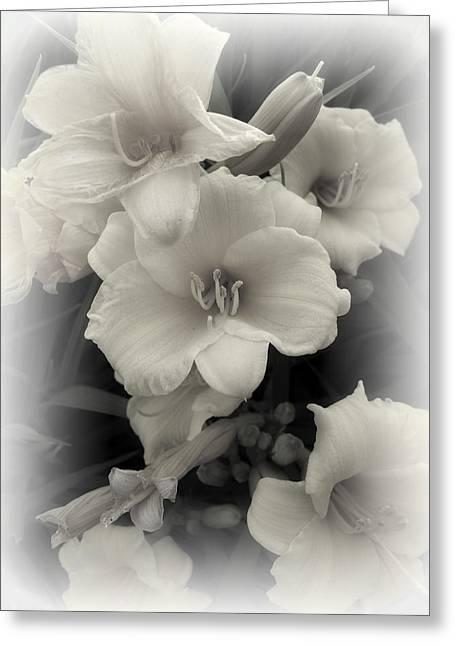 Daffodils Emerge Greeting Card by Daniel Hagerman