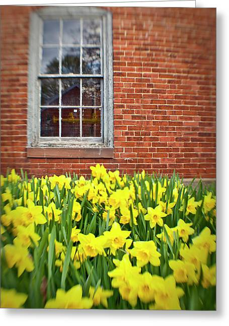 Daffodils In Portsmouth, New Hampshire Greeting Card by Jerry and Marcy Monkman