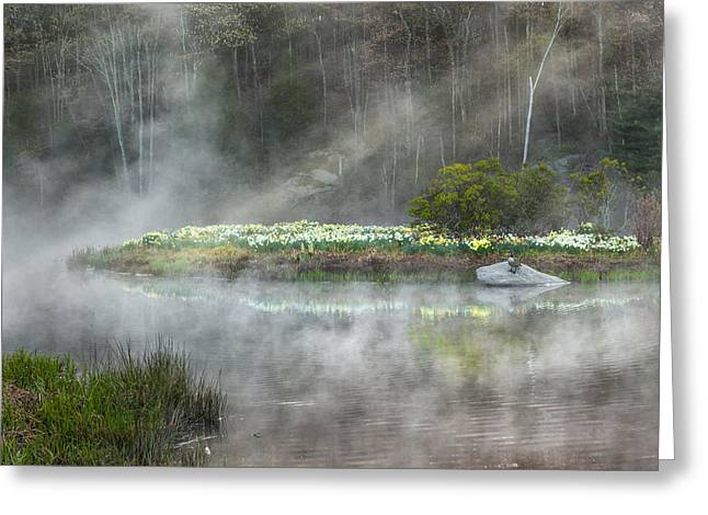 Daffodils Of The Fog Greeting Card by Bill Wakeley