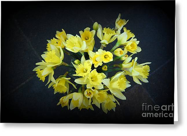 Daffodils Reaching Out Greeting Card