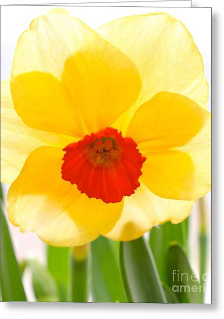 Daffy Greeting Card by Jay Nodianos