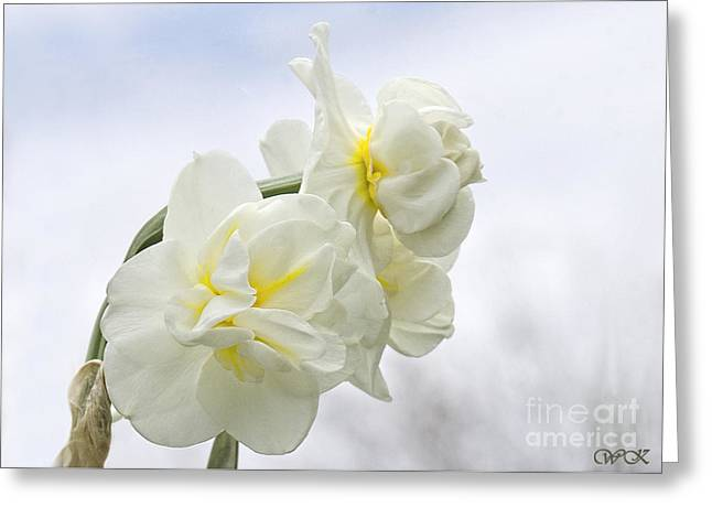 Greeting Card featuring the photograph Daffy's by Wanda Krack
