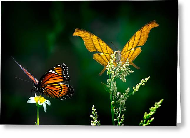 Daggerwing And Monarch Greeting Card
