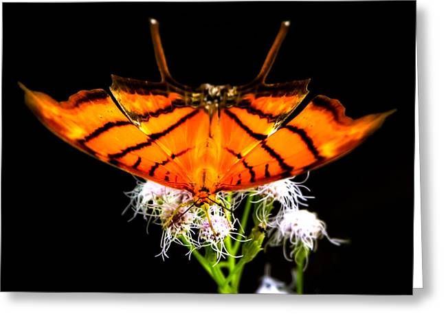 Daggerwing Fire Greeting Card by Mark Andrew Thomas