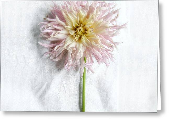 Dahlia #2 Greeting Card