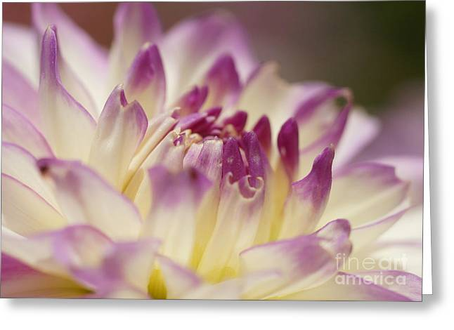 Dahlia 2 Greeting Card by Rudi Prott