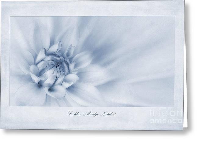 Dahlia 'abridge Natalie' Cyanotype Greeting Card by John Edwards