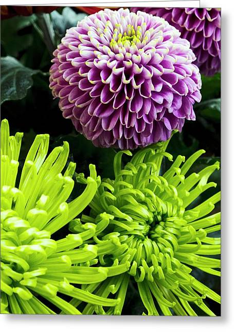 Dahlia And Chrysanthemum 'shamrock' Greeting Card by Ian Gowland