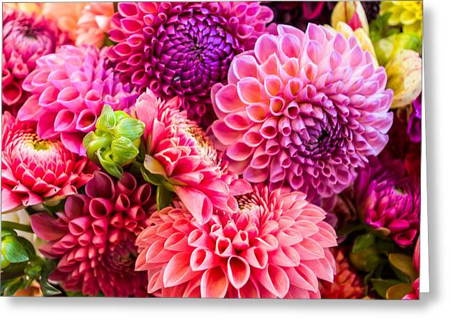Dahlia Bouquet Number 2 Greeting Card