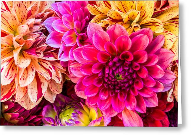 Dahlia Bouquet Number 3 Greeting Card