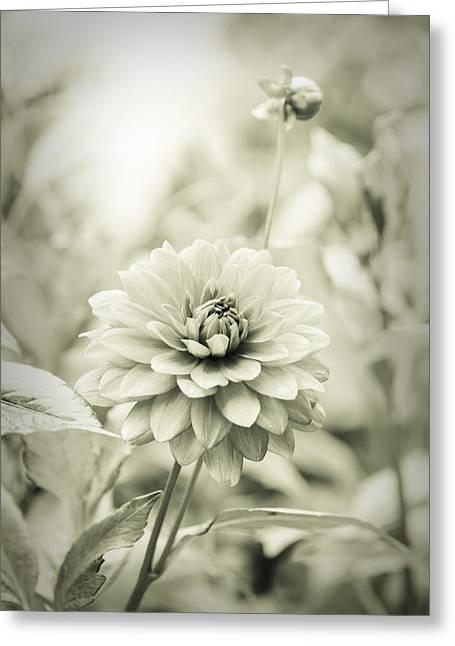 Dahlia - Dreamers Garden Series Greeting Card