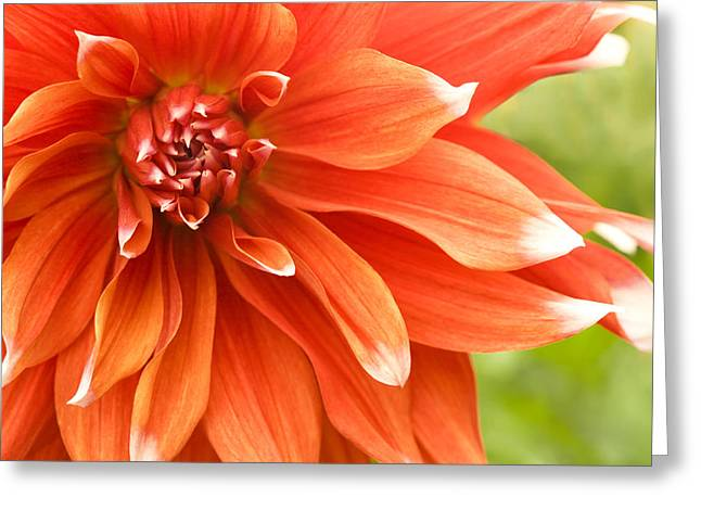 Dahlia IIi - Orange Greeting Card by Natalie Kinnear