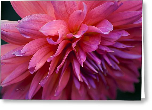 Dahlia In Pink Greeting Card by Julie Palencia