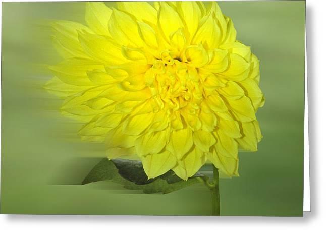 Dahlia In The Wind Greeting Card by Nina Bradica