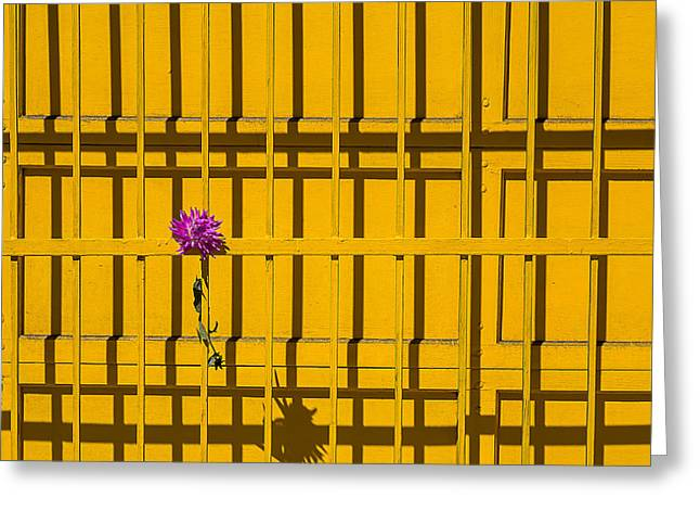 Dahlia In Yellow Gate Greeting Card by Garry Gay
